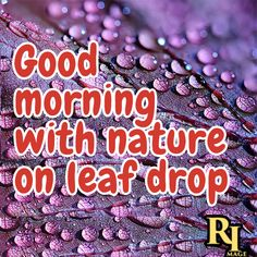 Good morning with nature on leaf drop Good Morning Nature Images, Hd Images, Feel Good, Drop, Pictures, Beautiful, Photos, Background Images Hd, Grimm