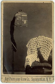 Cat watching bird in cage, 1880; some things never change!