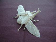 Origami- Shuki Kato