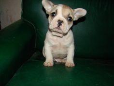Tablon con fotos de diferentes perros