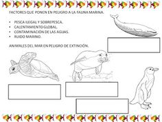 SOMOS LA CLASE DE LOS PECES Animal Projects, Science Labs, Sea Turtles, Vertebrates, Water Animals, Dolphins, Pets
