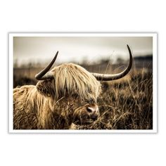 Highland Cow Canvas Print - x Photo Wall Art - Scottish Cattle Canvas Poster, Poster Prints, Types Of Cows, Highland Cow Canvas, Fluffy Cows, Tree Of Life Bracelet, Fishing Lures, Livestock, Free Pictures