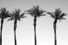 Palms away!  #HediSlimane #Photography #TGIF by roandcostudio