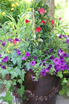 Love this container! Your container will set the tone for for your plant choices. Let your creativity flow from there. Container Plants, Container Gardening, Flower Containers, Gardening Hacks, Short Plants, Tall Plants, Garden Trellis, Potted Garden, Garden Ponds