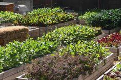 Pare e preste atenção: Dinamarca é o primeiro país que terá agricultura 100% orgânica por lei | Virgula