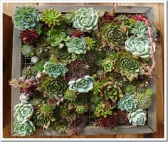 look at all those succulents!  sweet.