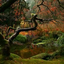 Portland Japanese Garden Pixdaus.com