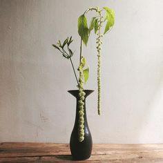 wataraitoruさんはInstagramを利用しています:「午前中の一杯。#tumblerandflowers #flower #flowers #amaranthus #alstroemeria #ikebana #いけばな #wataraikebana #naotsuguyoshida」