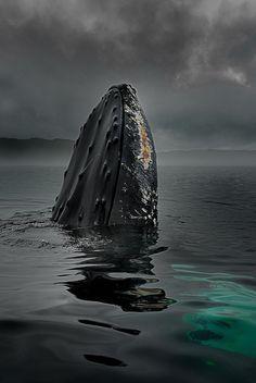 Humpback whale photo by Duiken Redactie Beautiful Creatures, Animals Beautiful, Photo Animaliere, Ocean Creatures, Humpback Whale, Whale Sharks, Tier Fotos, Sea World, Ocean Life