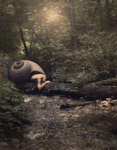Fantasy | Magical | Fairytale | Surreal | Enchanting | Mystical | Myths | Legends | Stories | Dreams | Adventures | Enchanted Forest