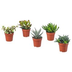 IKEA - SUCCULENT, Potted plant, assorted, Native to dry areas all over the world. This plant is sensitive to cold water and under watering. This may be the cause if the leaves start to fall off. Small Backyard Gardens, Back Gardens, Succulent Pots, Planter Pots, Potted Plants, Cactus Plants, Indoor Plants Online, Luz Solar, Packaging