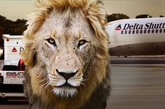 Delta Air Lines Bans Big Game Hunting Trophies | TakePart