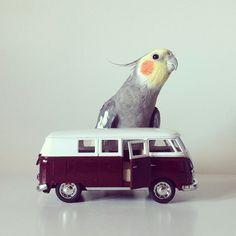 Instagram inspiration - Jack the cockatiel // www.petitloublog.com