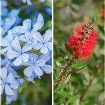 15 φυτά και λουλούδια που αντέχουν στον ήλιο και τη ζέστη Plants, Plant, Planets