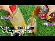 Organic Liquid Fertilizer, All Plants, Youtube, Youtubers, Youtube Movies