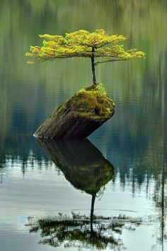 WOW... a tree on a rock in a middle of the lake. Fantastic beauty!