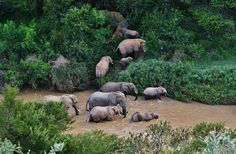 Crossing the Great Fish River - Kwandwe Private Game Reserve