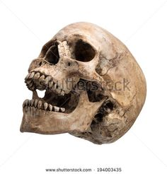 stock-photo-left-side-view-of-human-skull-open-mouth-on-isolated-white-background-194003435.jpg (450×470)