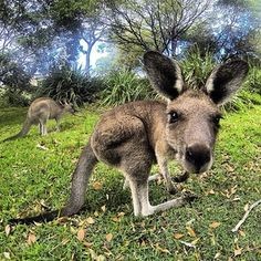 This Attention Seeker At Jervis Bay. | The 30 Cutest Animals In Australia Ranked From Cute To Very Very Cute