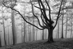 Bomen in de mist | Paradijsvogels Magazine