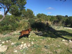 Imádom a természetet Mallorcán! / Love the nature in Mallorca! #mallorca #travel #nature #holiday
