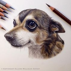 Awesome colored pencil works by Claire Milligan Pet Portrait & Wildlife Artist