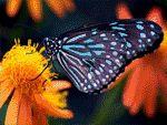 Flores con Mariposas de Colores