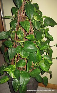 Give your houseplants extra TLC in the spring to kick off their growing season. Here are some great tips!