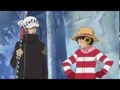 Luffy trust Law! - YouTube