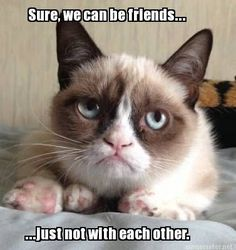 Grumpy cat frowns on your shenanigans. Grumpy cat is not impressed. I wonder if grumpy cat is an engineer. I did find some Grumpy Cat gifs: Grumpy Cat say \ Grumpy Cat Quotes, Meme Grumpy Cat, Funny Cat Memes, Memes Humor, Funny Cats, Funny Animals, Cute Animals, Funniest Animals, Hilarious Quotes