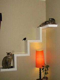 Cat climbs:) #cats
