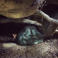 Heute konnte sich kein Cache vor uns verstecken. #geocaching #wandern #rlp #hiking