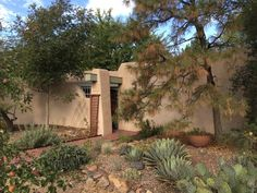 The beauty of a cactus garden in the high desert.