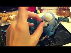 Budgie Takes Over The Keyboard - Check Out The Flying! - http://www.parrotshop.org/budgie-takes-over-the-keyboard-check-out-the-flying/