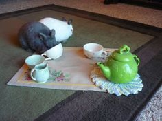 Bunnies have a tea party - December 17, 2013 - More photos at today's Daily Bunny post: http://dailybunny.org/2013/12/17/bunnies-have-a-tea-party/ !