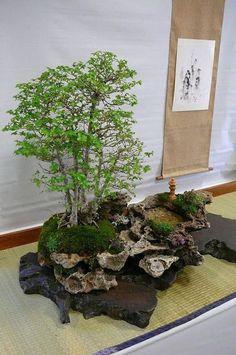 + Plantas: A Arte Milenar do Penjing - Micropaisagismo Natural #bonsai