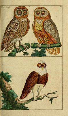 T 1 - Unterhaltungen aus der Naturgeschichte. - Biodiversity Heritage Library. Gottlieb, Tobias Wilhelm.