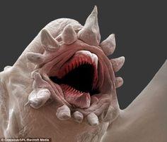 深海生物 deep-sea-worm