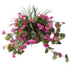 G raniums on pinterest for Plante fushia exterieur