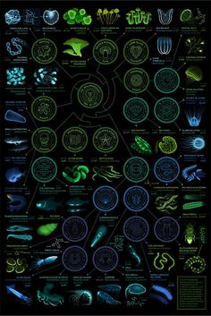 A visual compendium of glowing creatures : a year-long infographic design project between biology and design Sistema Solar, Life Science, Science And Nature, Science Art, Science Pics, Science Illustration, Web Design, Graphic Design, Marine Biology