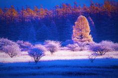 Light in autumn in wetlands 5 by Chikara Amano