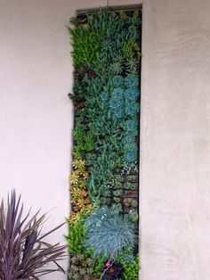Real Simple Climbing Plants Small Patio Design, Pictures, Remodel, Decor and Ideas - page 15   @Julie Forrest Winters think you could help me do this? I think it would be neat on the back patio wall