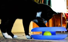 "A track ball toy is a great gift to buy your new kitten or cat. Place it in your cat's new ""safe room"" where he'll acclimate for a few days before joining the rest of your home. You'll be able to hear the sound of the toy and know he's enjoying himself. Available at #TuesdayMorning for $5.99, compared to $10.99."