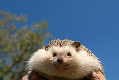 The hedgehog is smiling at me!