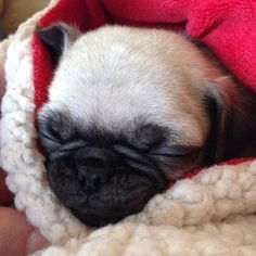 Sleepy goodness