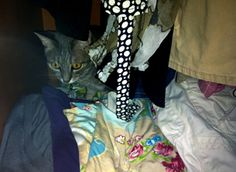 LILLY: ama curiosare negli armadi...