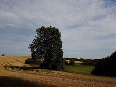 Hügellandschaft mit Getreidefeld bei Angermünde.