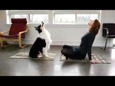 Un perro que hace ejercicio con su dueña