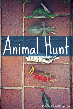 Looking for a fun Outdoor Adventures? Take the kids on an Animal Hunt!