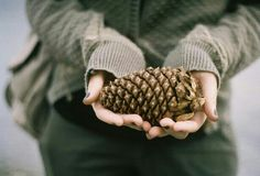 Human hand holding pine cones in his hands. Autumn Day, Winter Day, Autumn Leaves, Lightroom, Katniss Everdeen, Pine Cones, Shades Of Green, Green And Brown, At Least